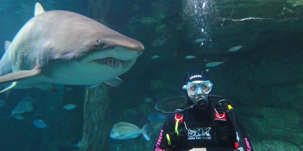 Sydney Aquarium Shark Dive Xtreme