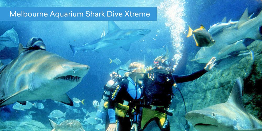 Melbourne Aquarium Shark Dive Xtreme