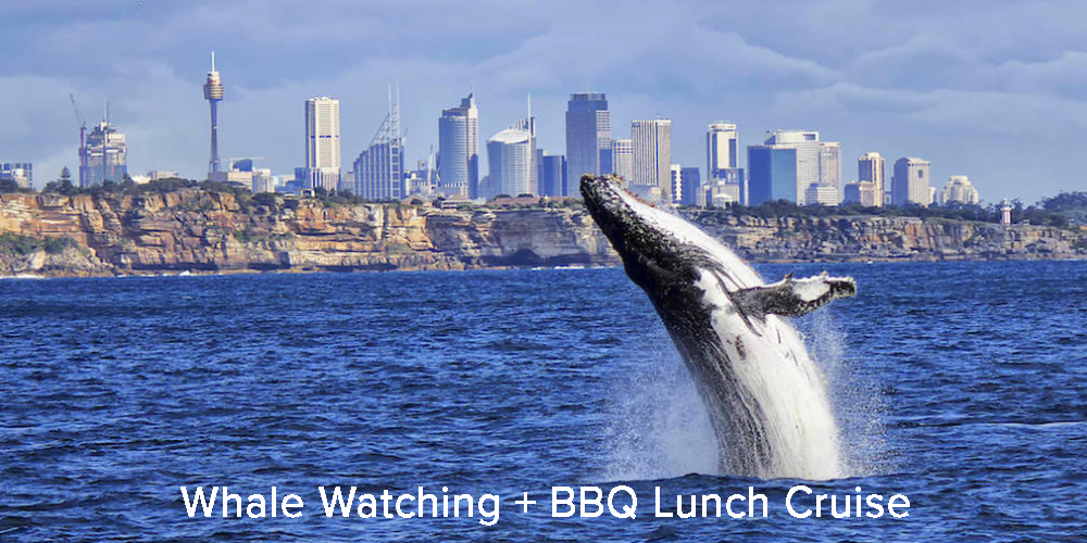 Whale Watching + BBQ Lunch Cruise