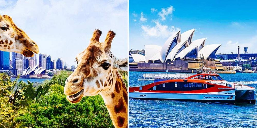 Taronga Zoo & 2-day Hop on Hop off pass