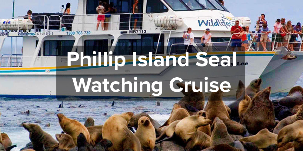 Phillip Island Seal Watching Cruise