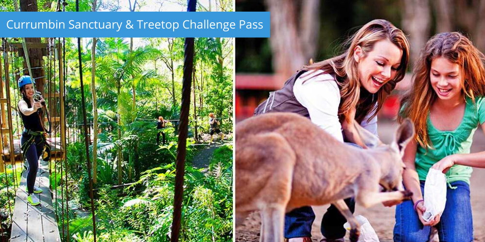 Currumbin Sanctuary & Treetop Challenge Pass