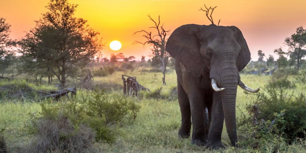 LIVE Interactive Tour: Go on a Safari in the Kruger National Park